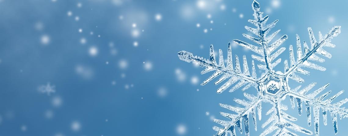 Zima w Magnolkach